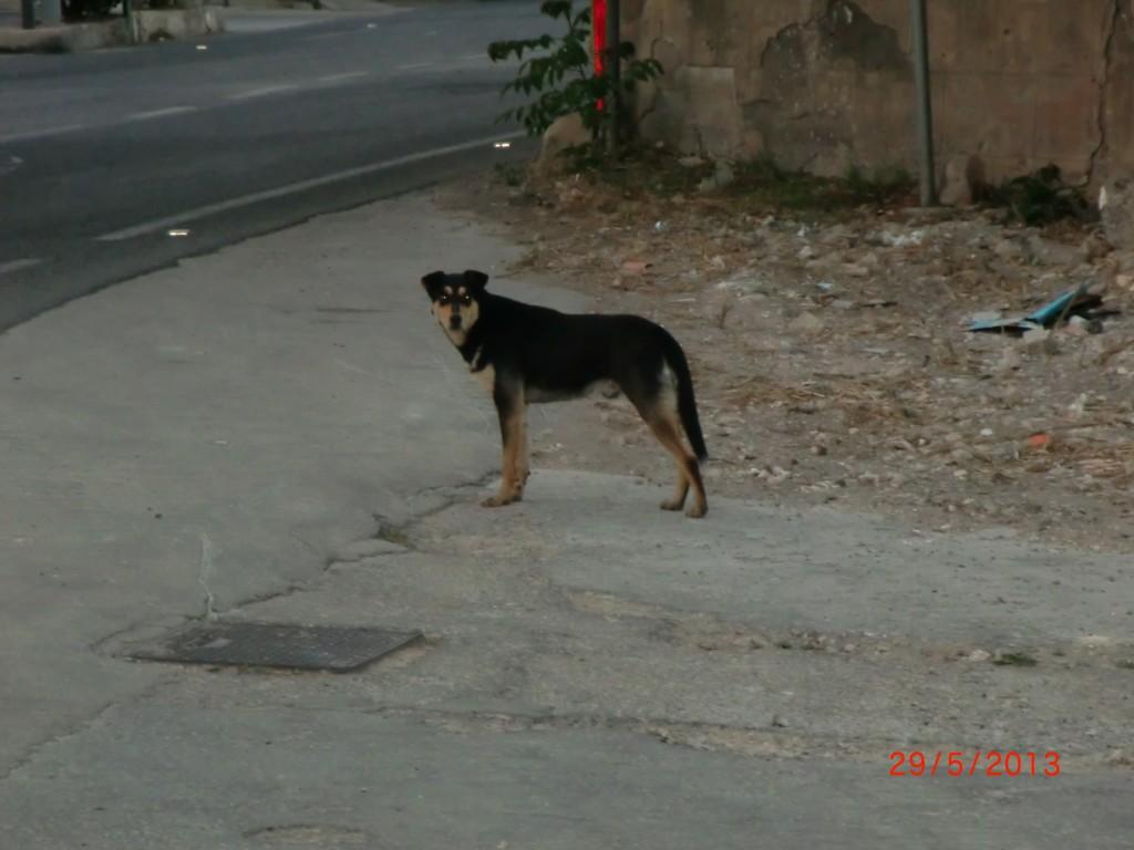 Straßenhund auf Sizilien